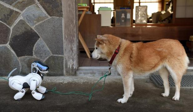 0306robotdog02