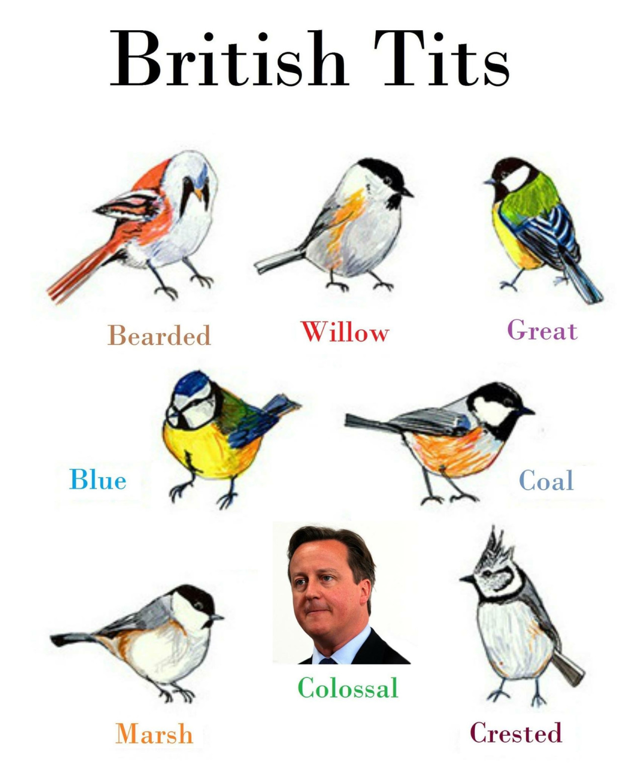Image result for british tits birds funny